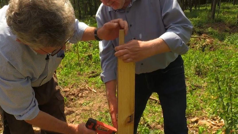 Holzplanken gegen Wildverbiss