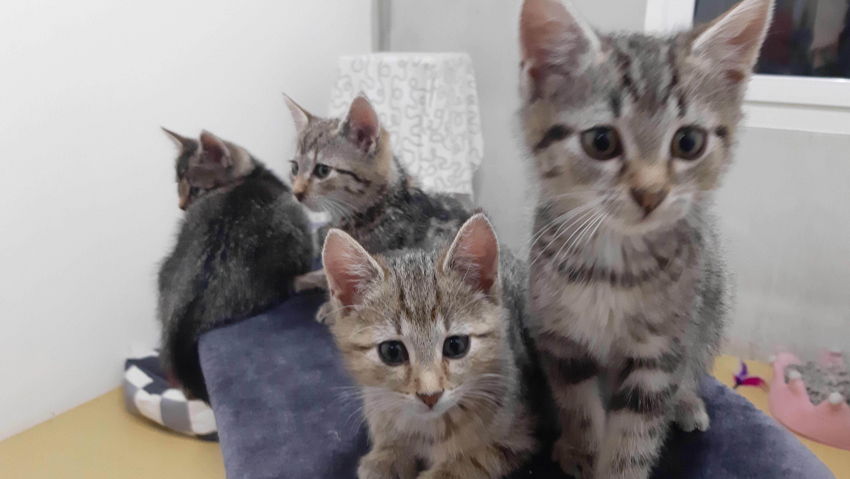 Katzen im Tierheim Plattling