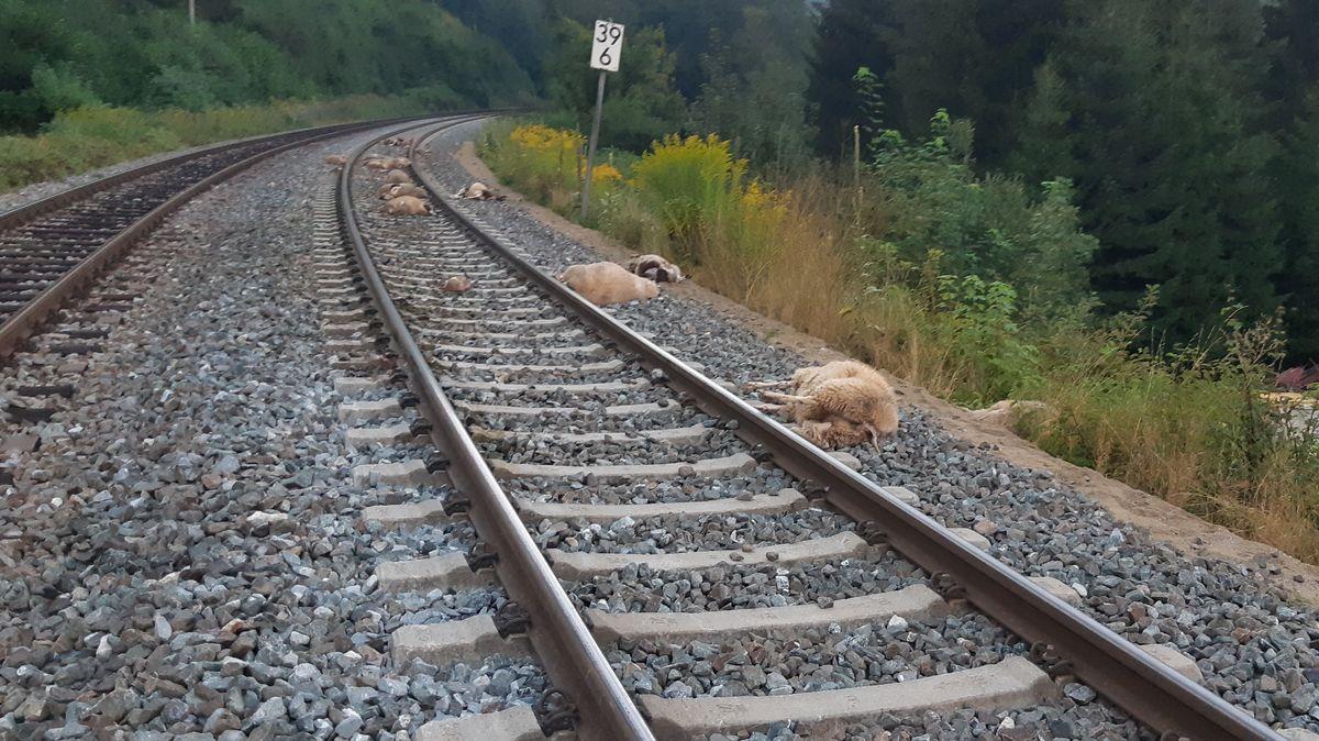 16 Schafe haben einen Zusammenstoß mit einem Regionalexpress zwischen Weigendorf und Etzelwang nicht überlebt.