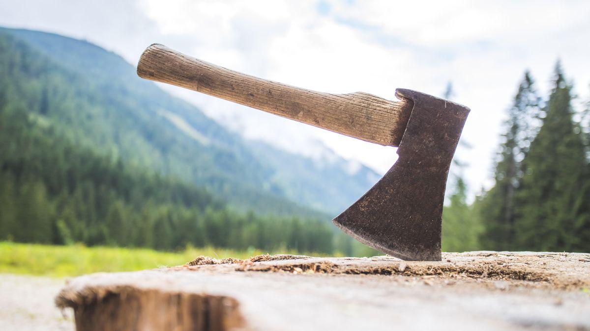 Symbobild: Eine Axt steckt in einem Hackstock vor Nadelwäldern