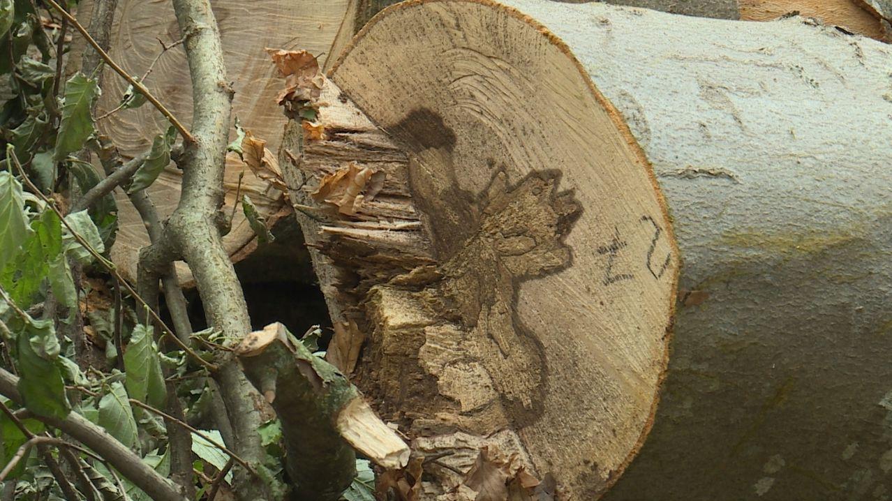 Ein gefällter Baum liegt auf dem Boden.