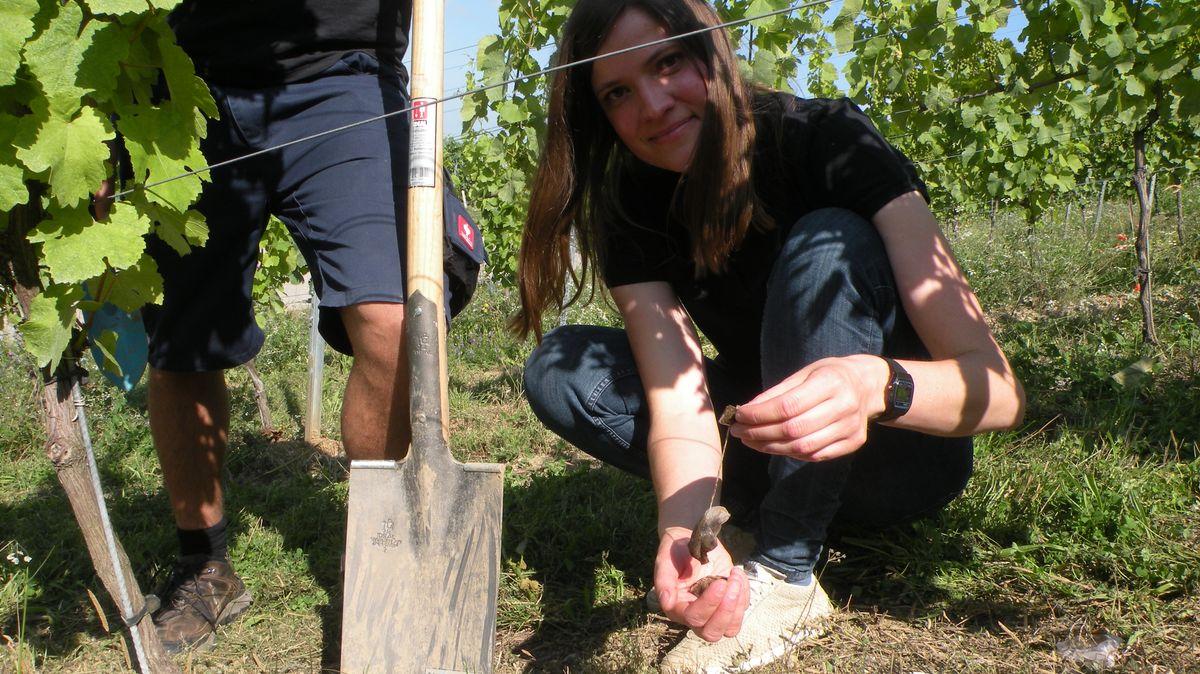 Projektleiterin Anja Menger von der Landesanstalt für Wein- und Gartenbau