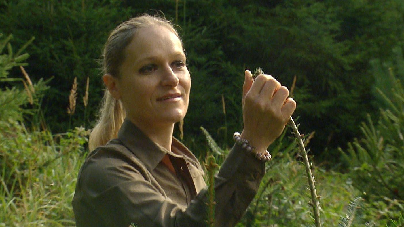 Ramona Pohl prüft eine junge Tanne. Sie zeigt keinerlei Spuren von Wildverbiss.