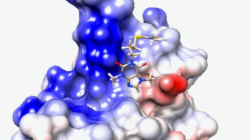 """Das """"N-Protein"""" des Corona-Virus haben die Forscher als Angriffspunkt ausgesucht, um ein Medikament gegen Covid19 zu suchen."""