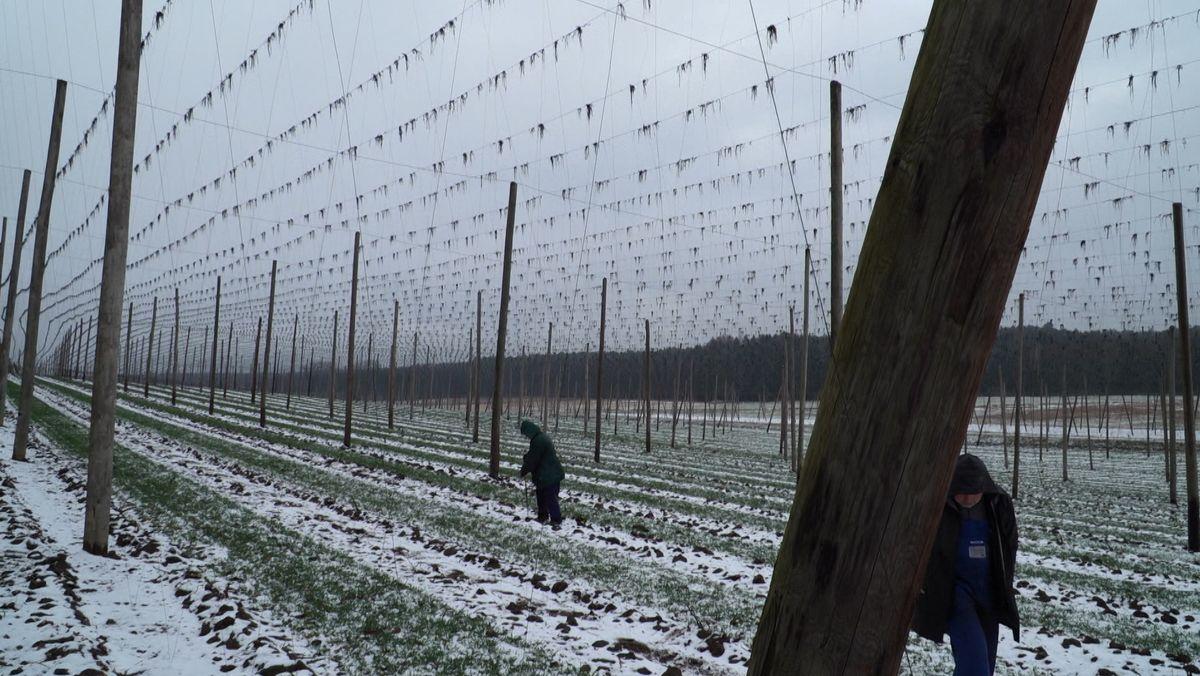 Saisonarbeiter im Hopfengarten