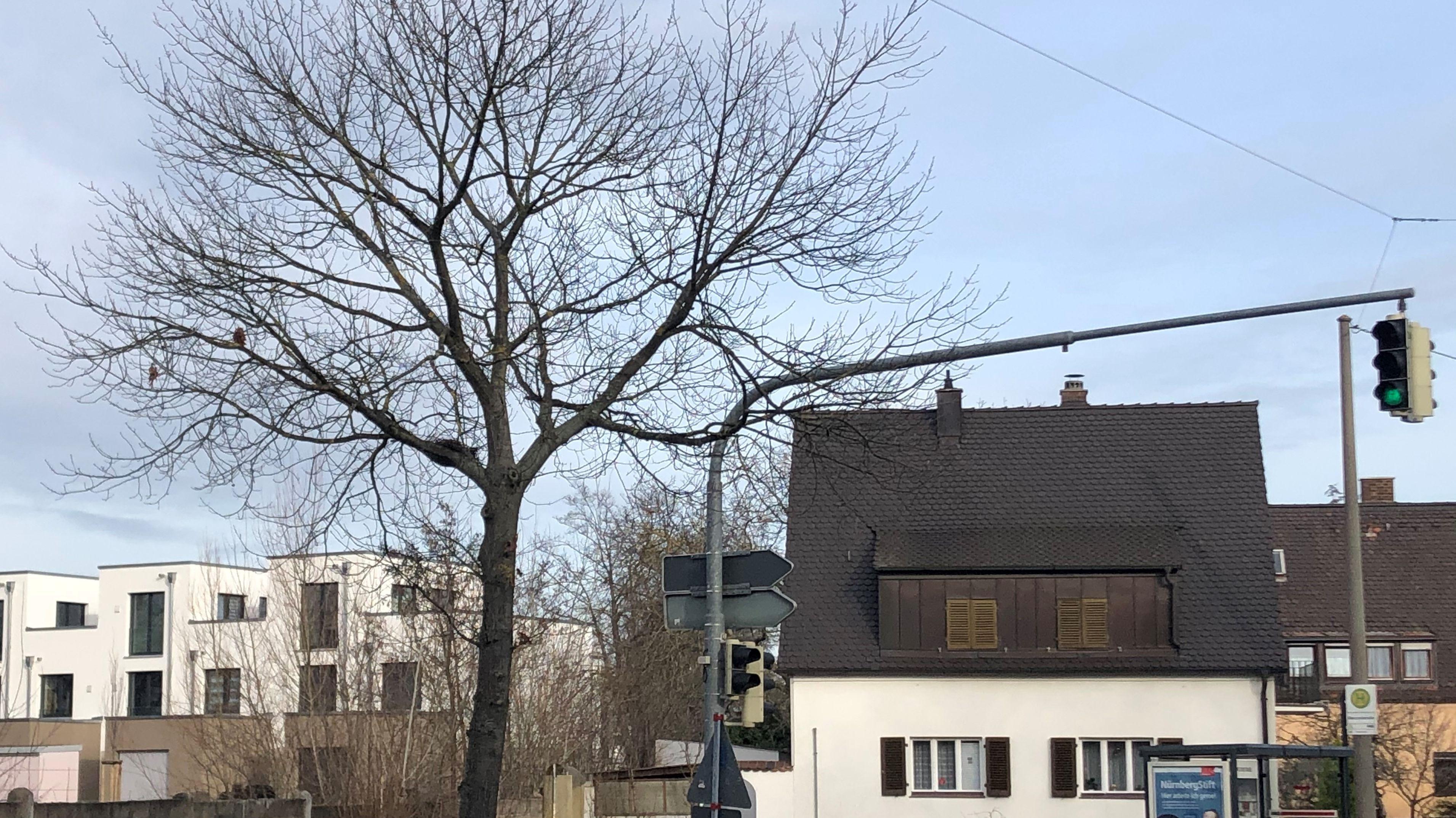 Ein einzelner Baum an der Wallensteinstraße in Nürnberg