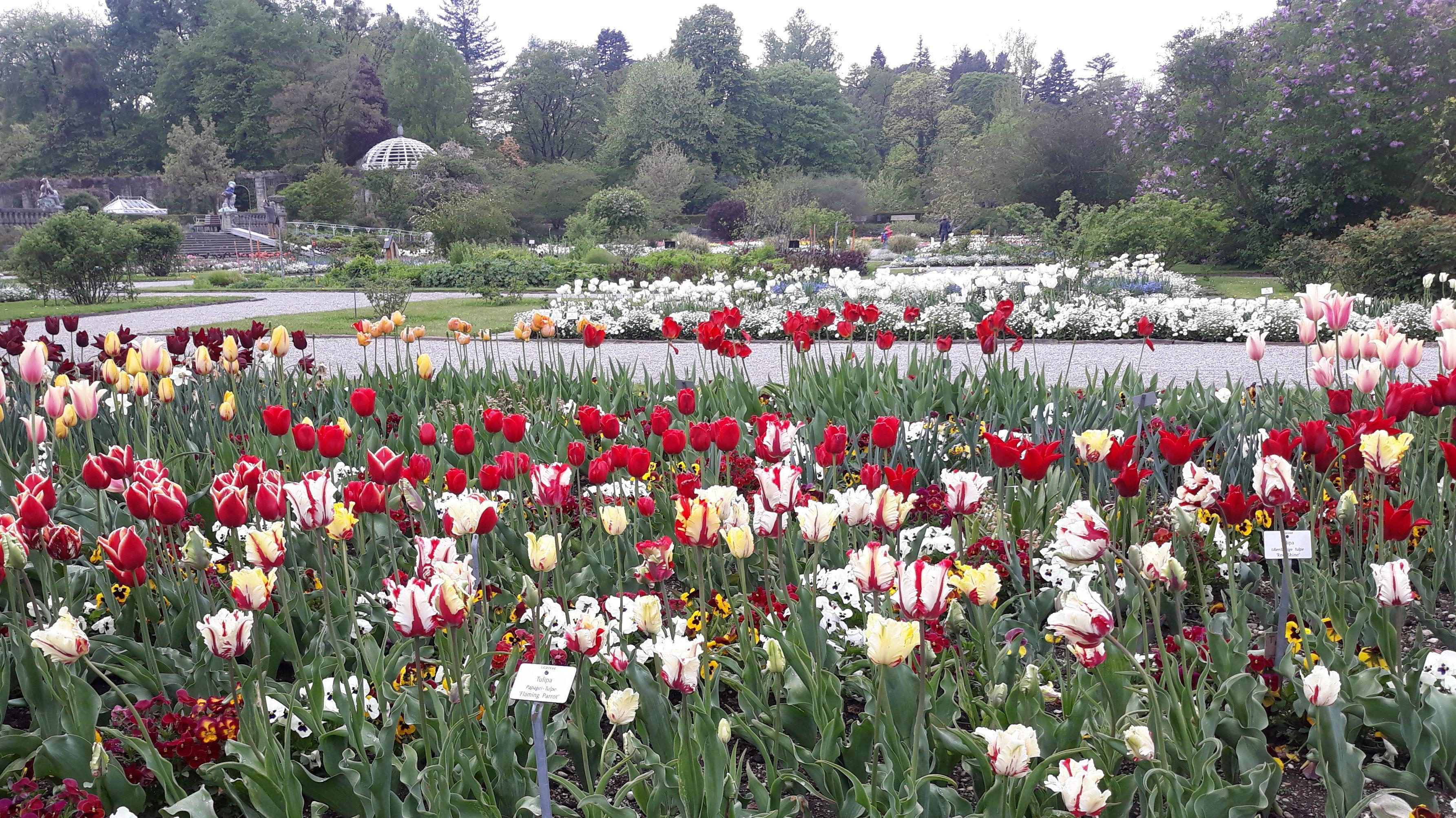 Die Botanischen Gärten in Hof, Bamberg und Bayreuth haben trotz der Corona-Pandemie geöffnet