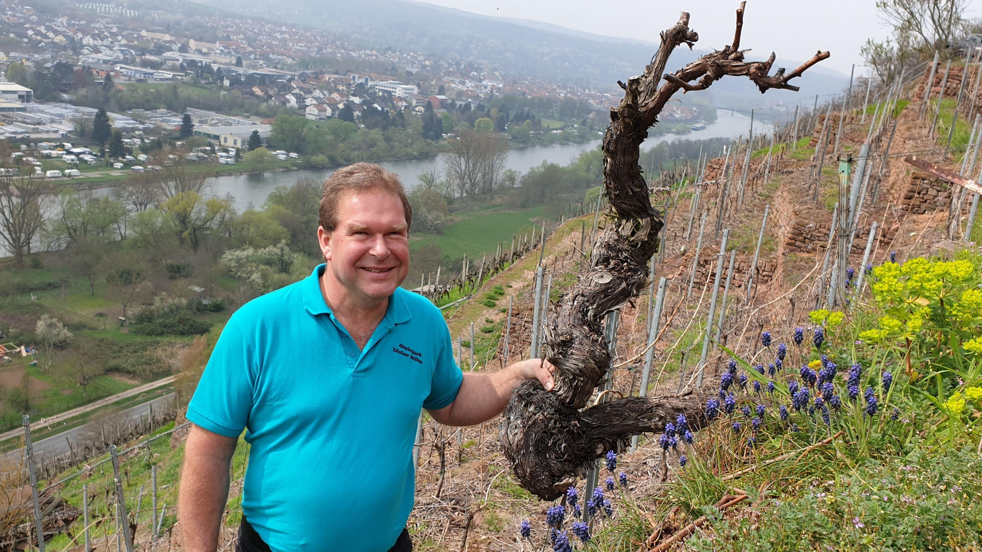 Winzer Dieter Zöller in seinem Weinberg am Erlenbach am Main.