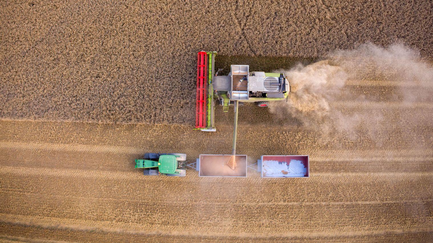 Mit Mähdreschern ernten Bauern ein Weizenfeld ab.