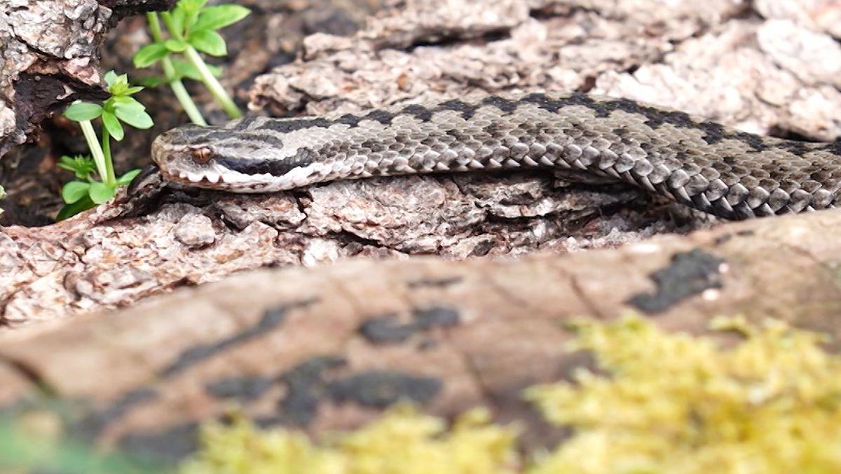 Eine Schlange im neuen Reptiliengehege