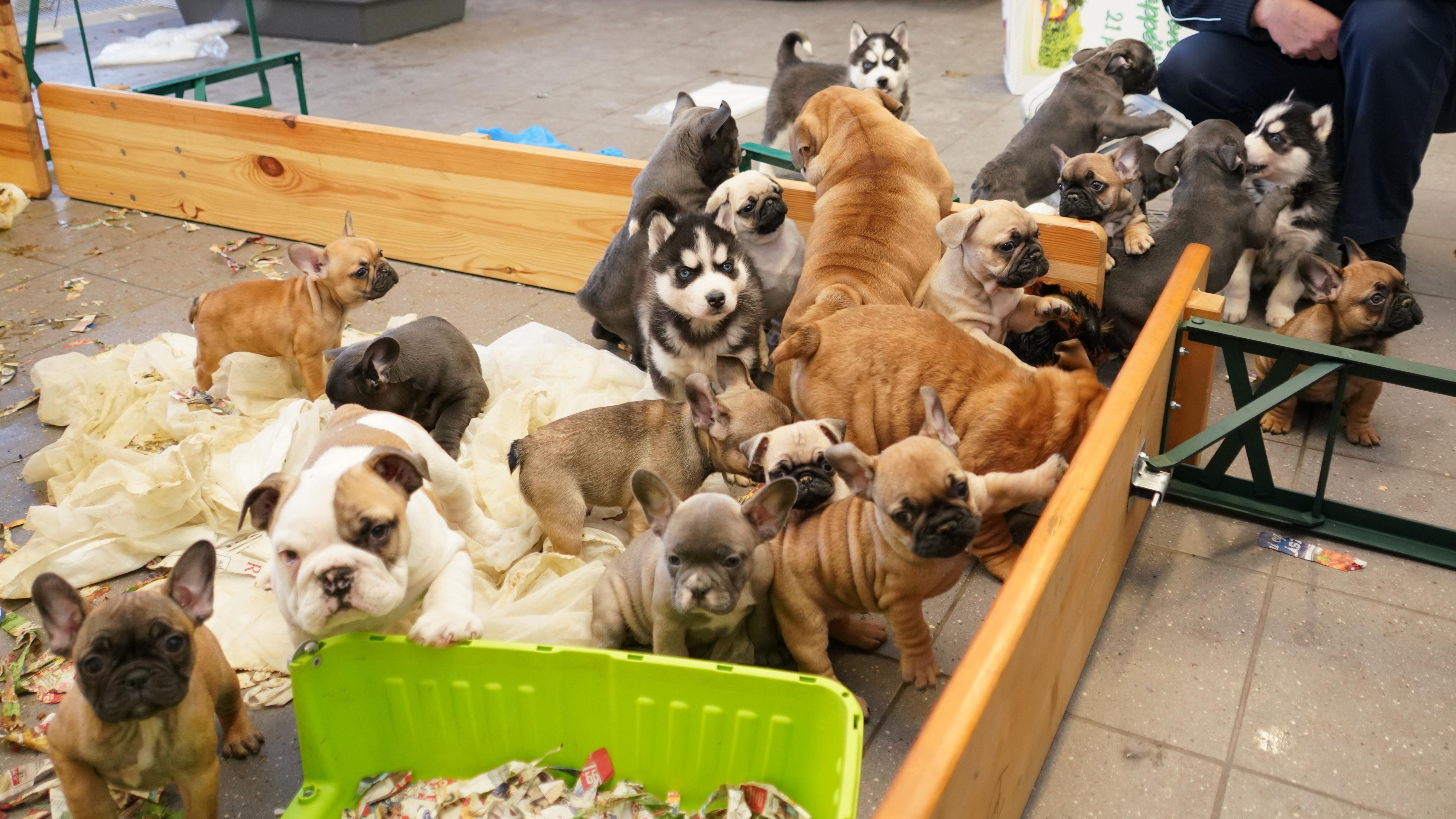 Illegale Hundewelpen bei Waidhaus