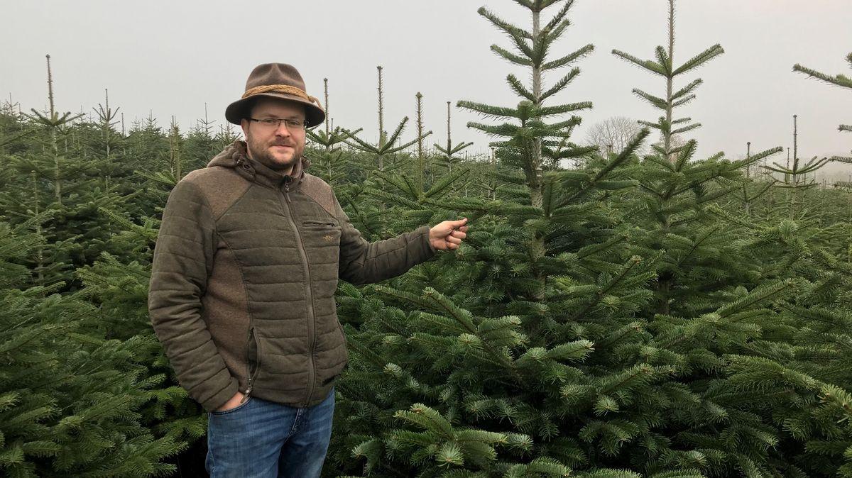 Michael Hechinger auf seiner Christbaumplantage im Kreis Passau