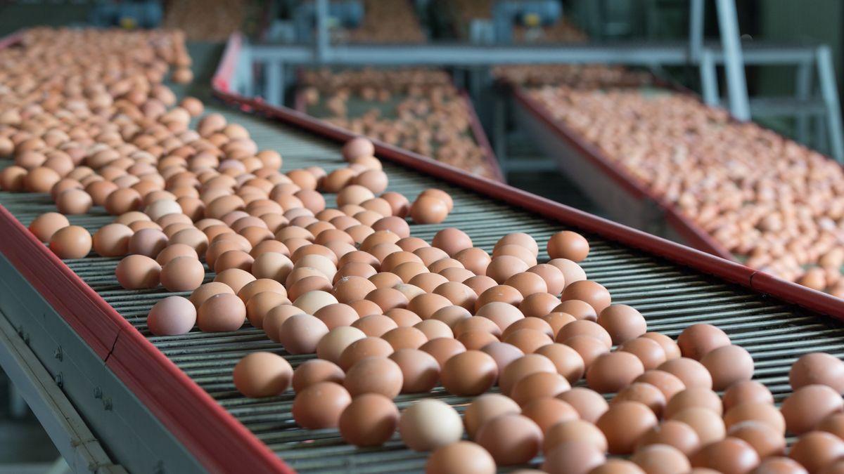 Eier auf einem Förderband.