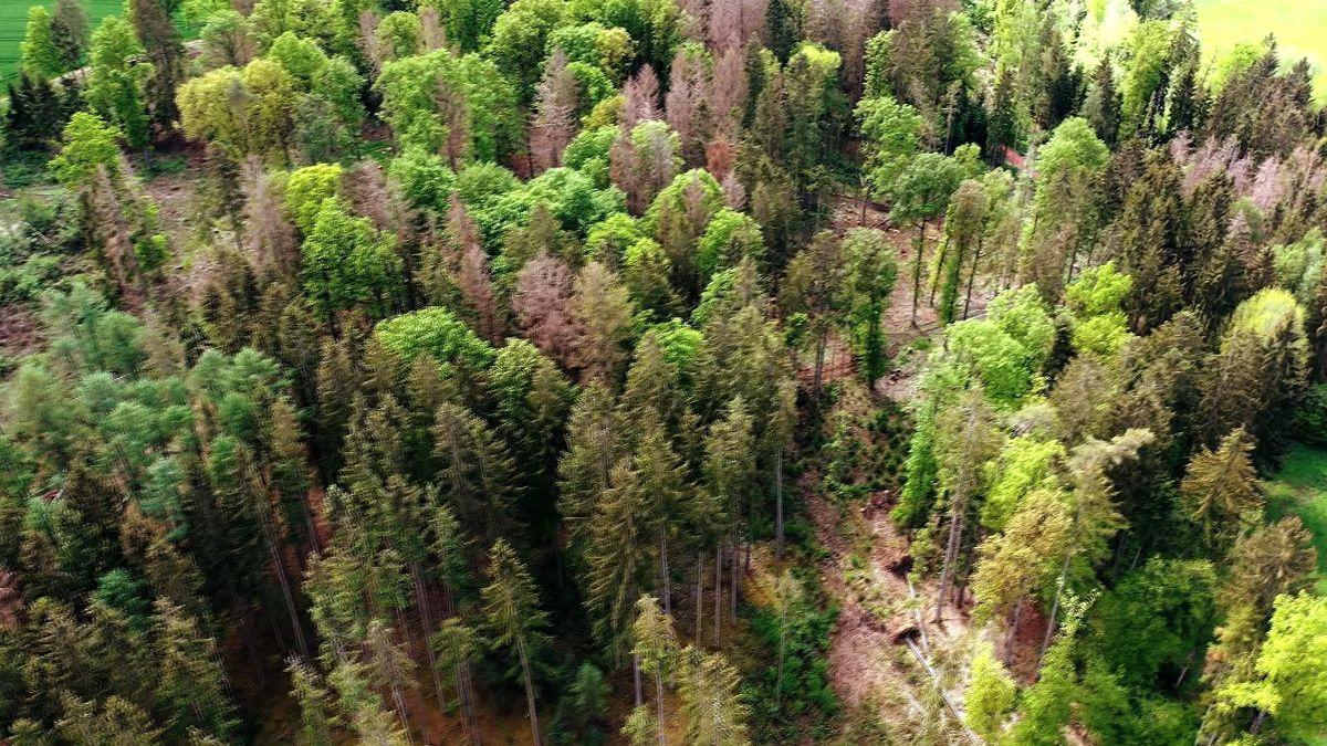 Waldsterben in Franken