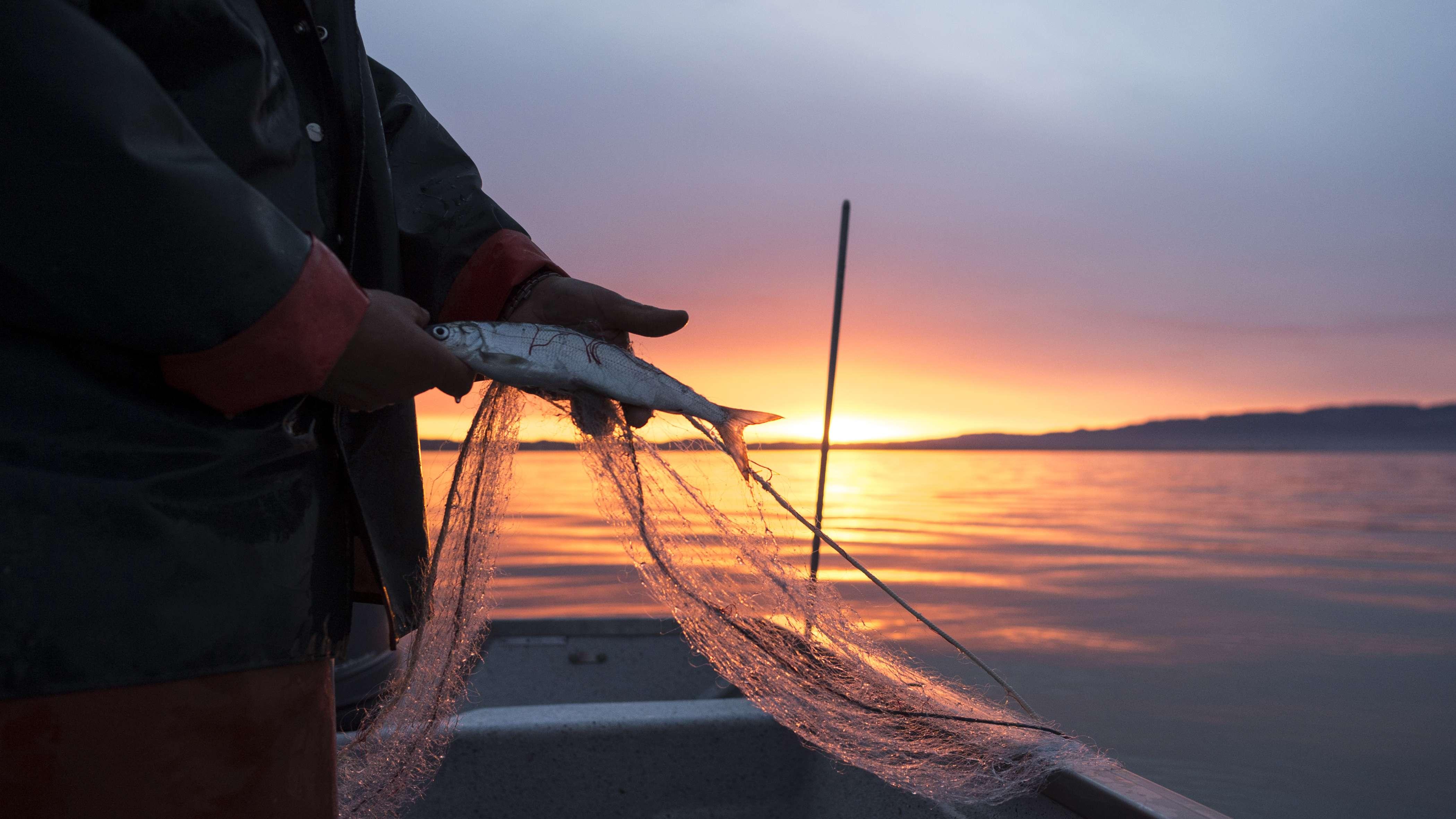 Ein Fischer mit einem Felchen vor aufgehender Sonne.
