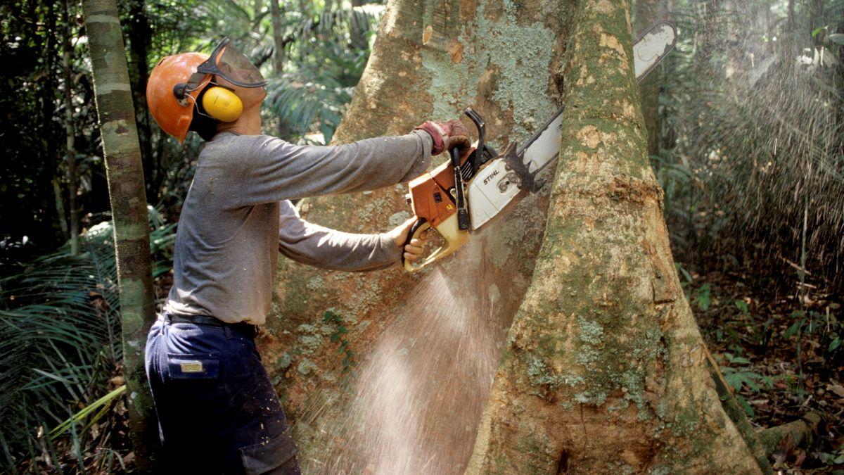 Abholzung im Regenwald-Gebiet