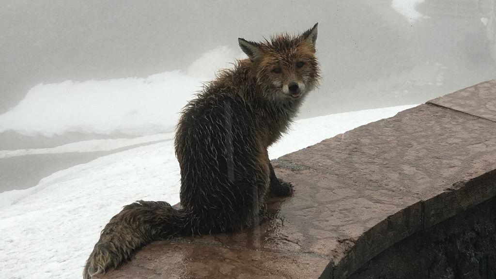 Immerhin ein Besucher: Der Fuchs kommt regelmäßig vorbei.