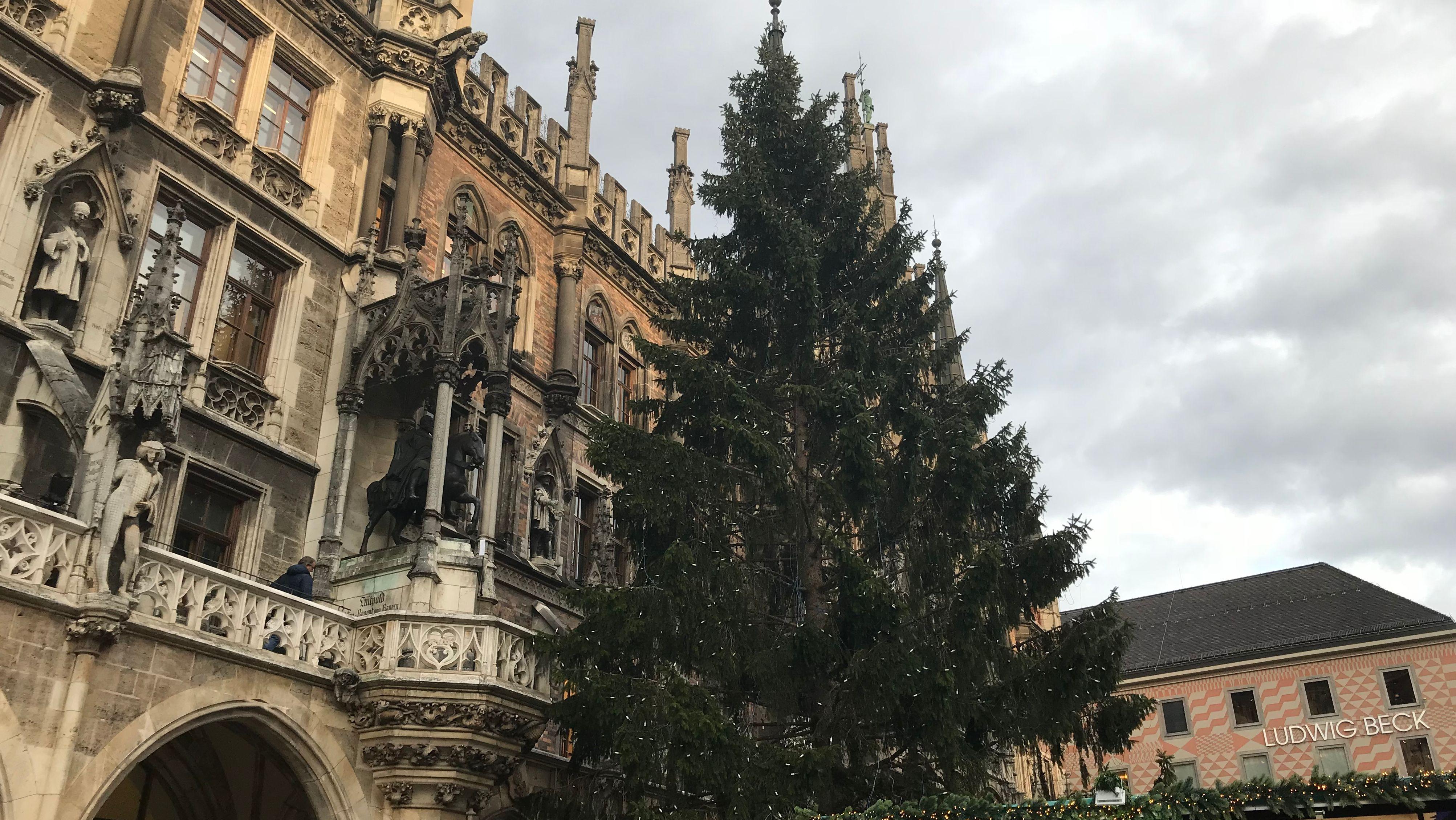 Christbaum aus Mauth (Lkr. Freyung-Grafenau) vor dem Münchener Rathaus