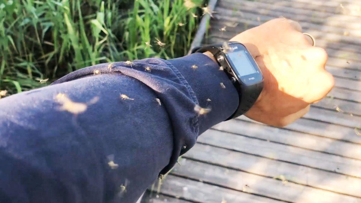 Mückenplage am Ammersee: Mücken umschwirren einen Mann