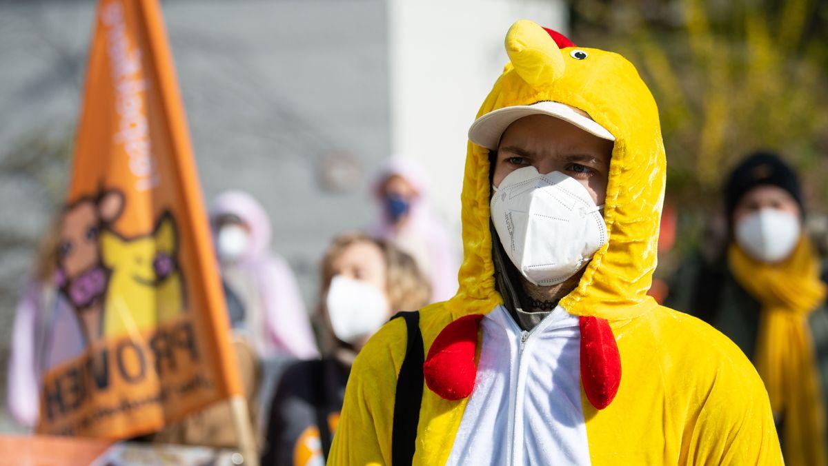Ein als Huhn verkleideter Teilnehmer einer Kundgebung demonstriert vor der bayerischen Staatskanzlei für die Agrarwende.