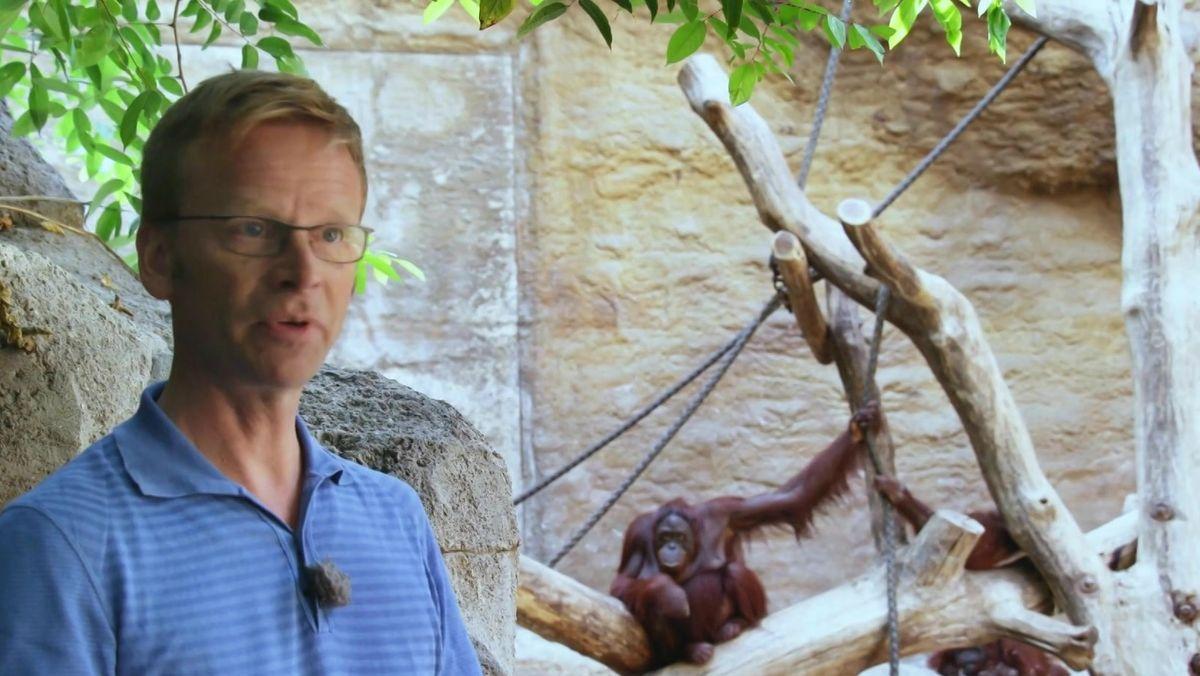 Dr. Rainer Hagencord vom Institut für Theologische Zoologie beim Interview im Affenhaus im Tiergarten in München.