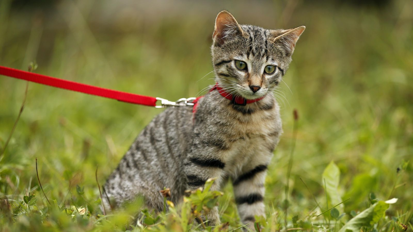 """Leinenpflicht für Katzen? Auch Bayern hat ein """"Katzenproblem"""""""