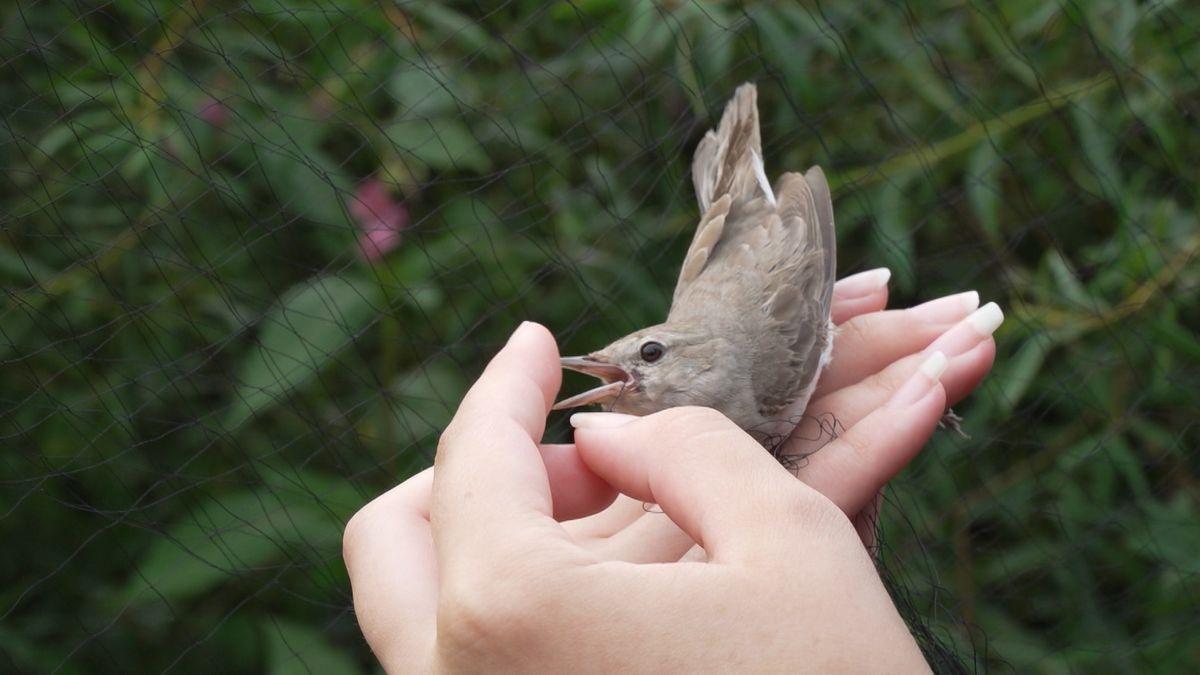 Ein Vogel sitzt auf einer Hand