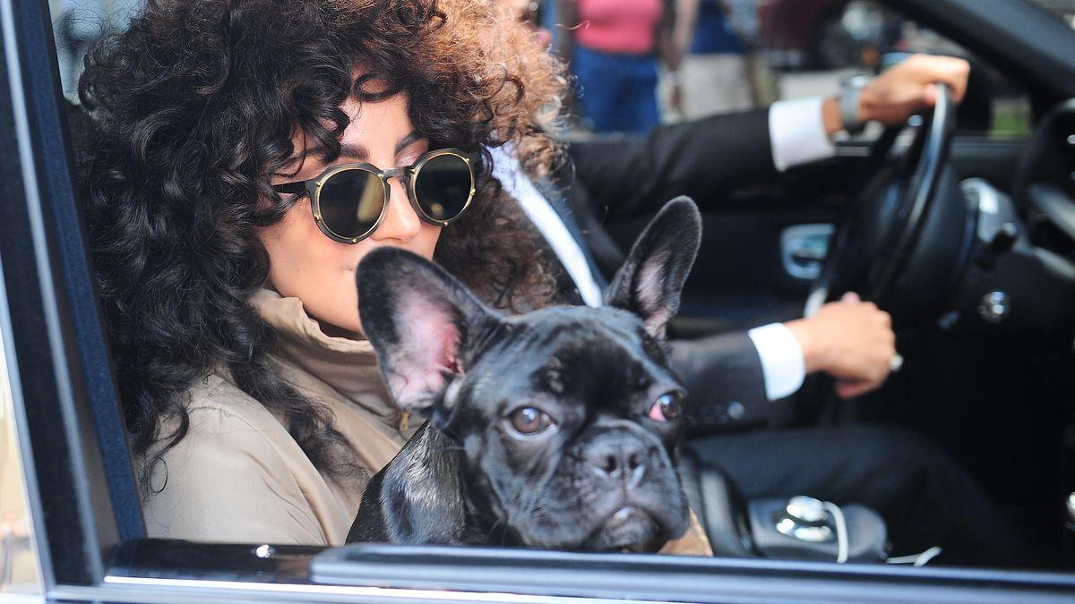 Lady Gaga mit Hund