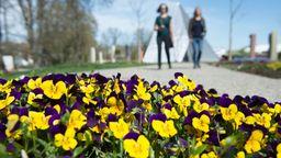 Blumenbeet auf einer Landesgartenschau | Bild:dpa-bildfunk/Timm Schamberger