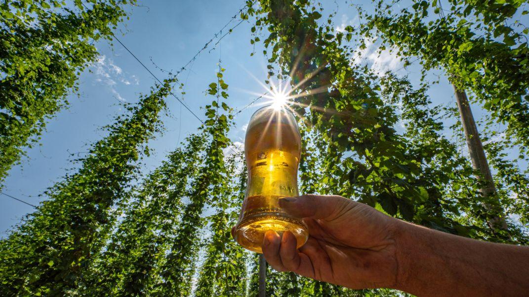 Ein Mann hält in einem Hopfenfeld ein Glas mit Bier.