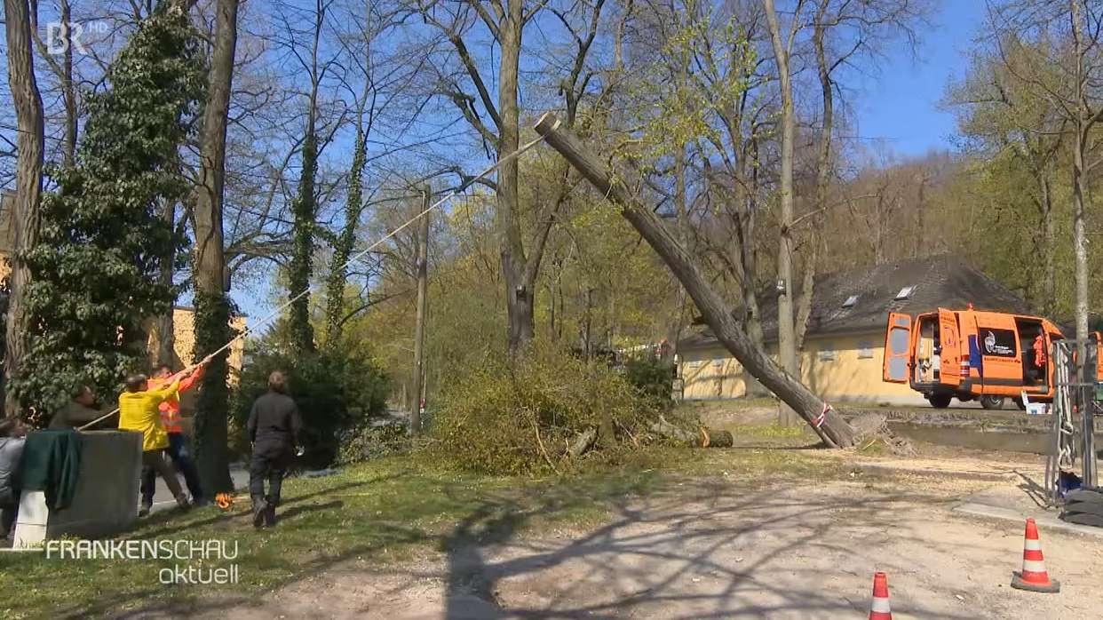 Für mehr Sicherheit: Bäume wurden gefällt.