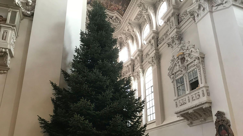 Im Passauer Dom: Der Christbaum steht