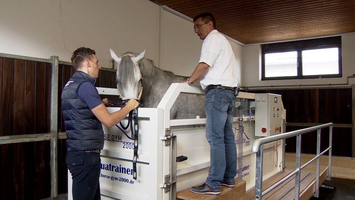 Ein Pferd in einem Aquatrainer im Pferde-Gesundheitszentrum in Illertissen