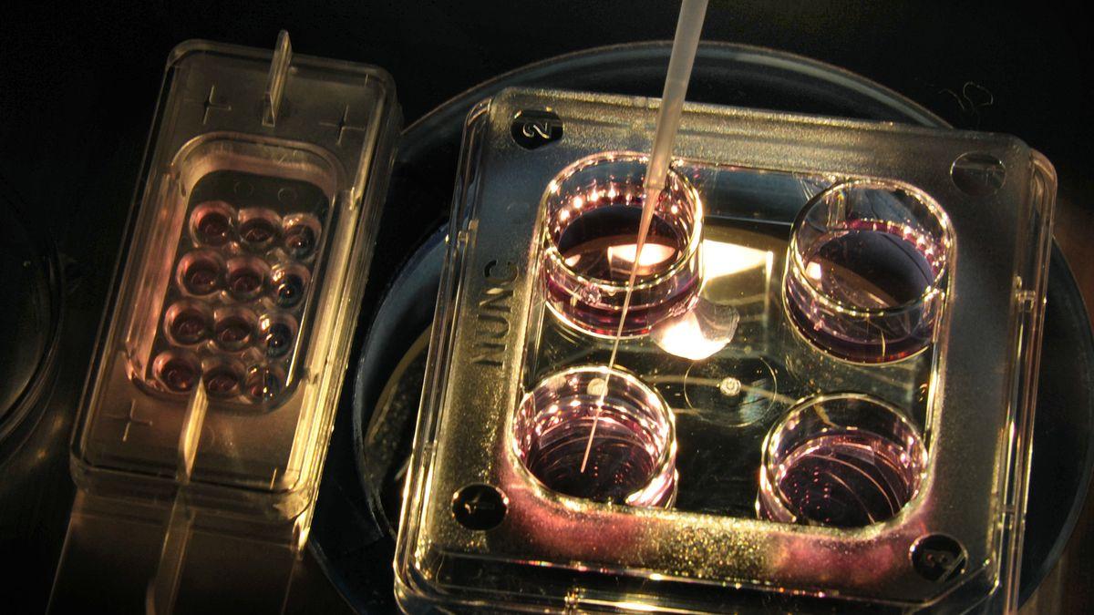 Kulturgefäße mit Embryonen