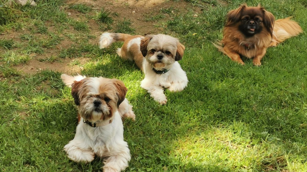 Drei der beschlagnahmten Hunde