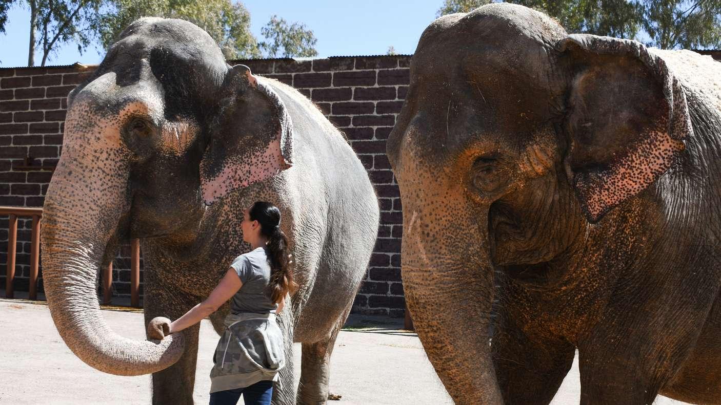 Circus Krone: Jana Mandana Lacey-Krone steht neben zwei Elefanten.