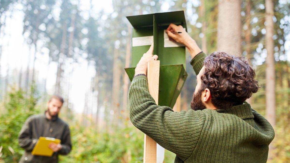 Immer mehr junge Bayern wollen Freiwilliges Ökologisches Jahr machen