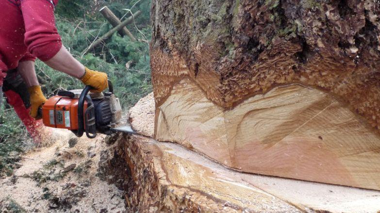 Fällung eines Baumes