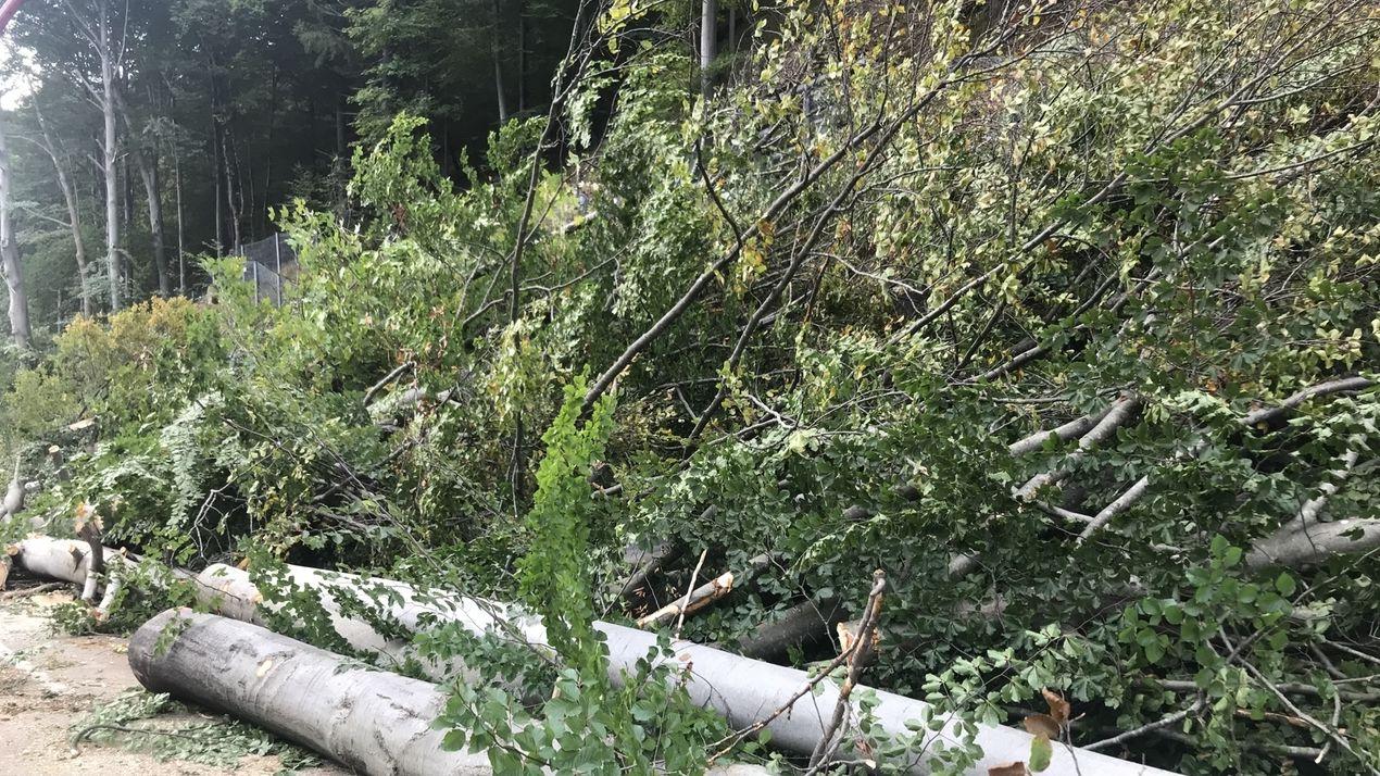 In Oberbayern waren mehrere Gegenden von einem Föhnsturm betroffen