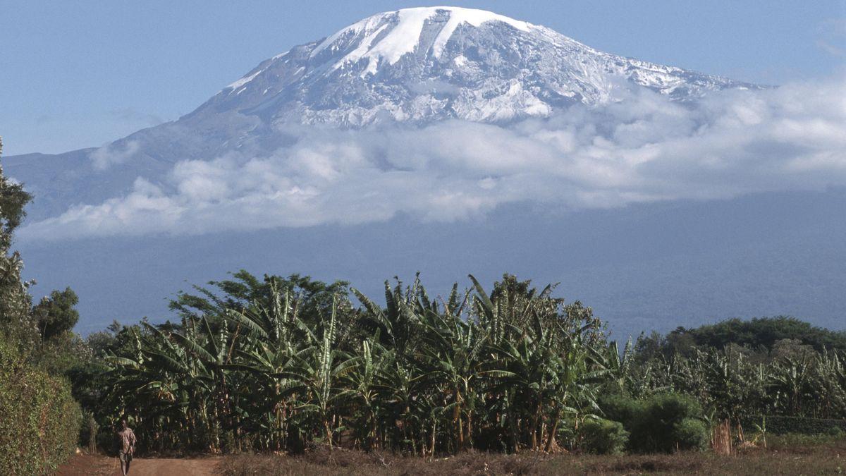 Eine Bananenplantage am Fuße des Kilimandscharo