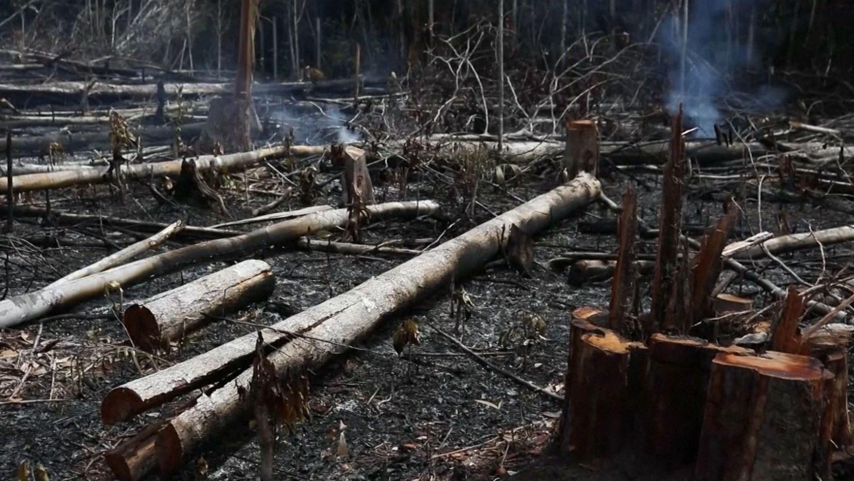 Waldbrände in Amazonas
