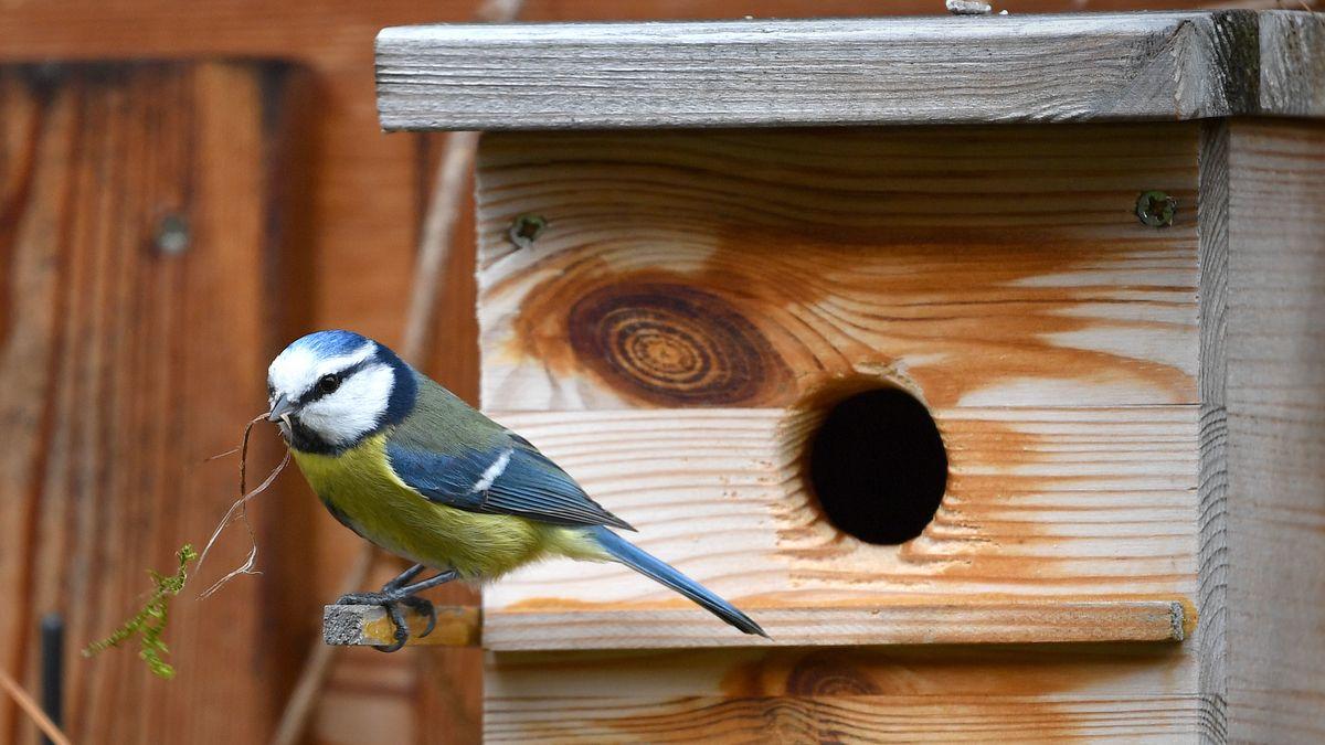 """Nur noch durchschnittlich 30 Vögel pro Garten wurden bei der diesjährigen """"Stunde der Gartenvögel"""" gezählt."""
