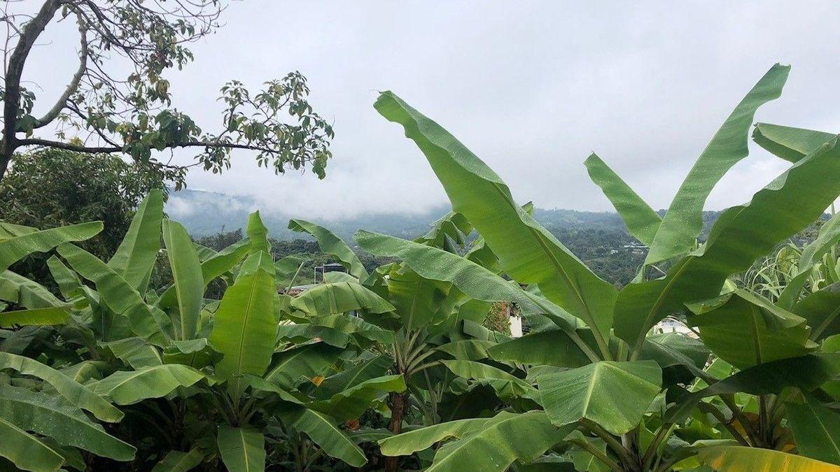 Ausblick in Kolumbien