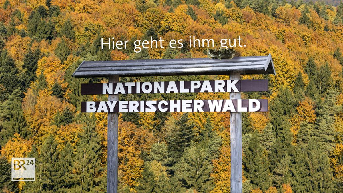 Freie Bahn für den Borkenkäfer im Nationalpark Bayerischer Wald