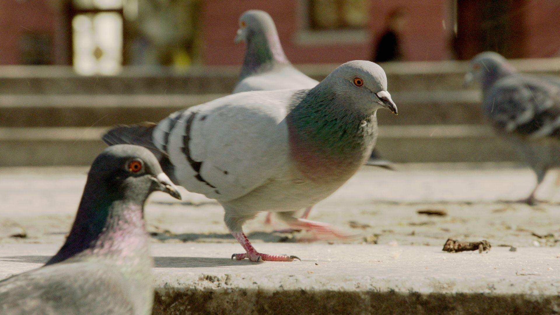 Tauben auf einer Straße