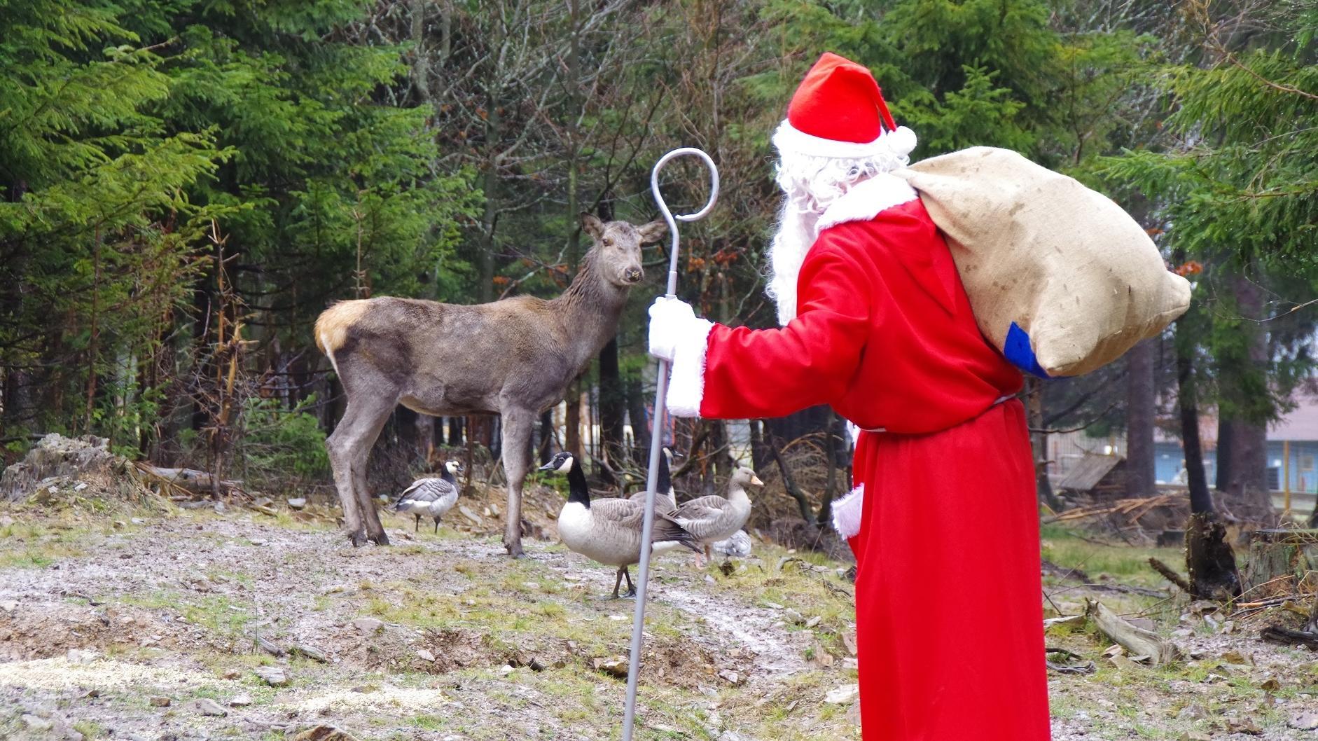 Ein Weihnachtsmann steht mit Stab und Geschenkesack im Wildpark.