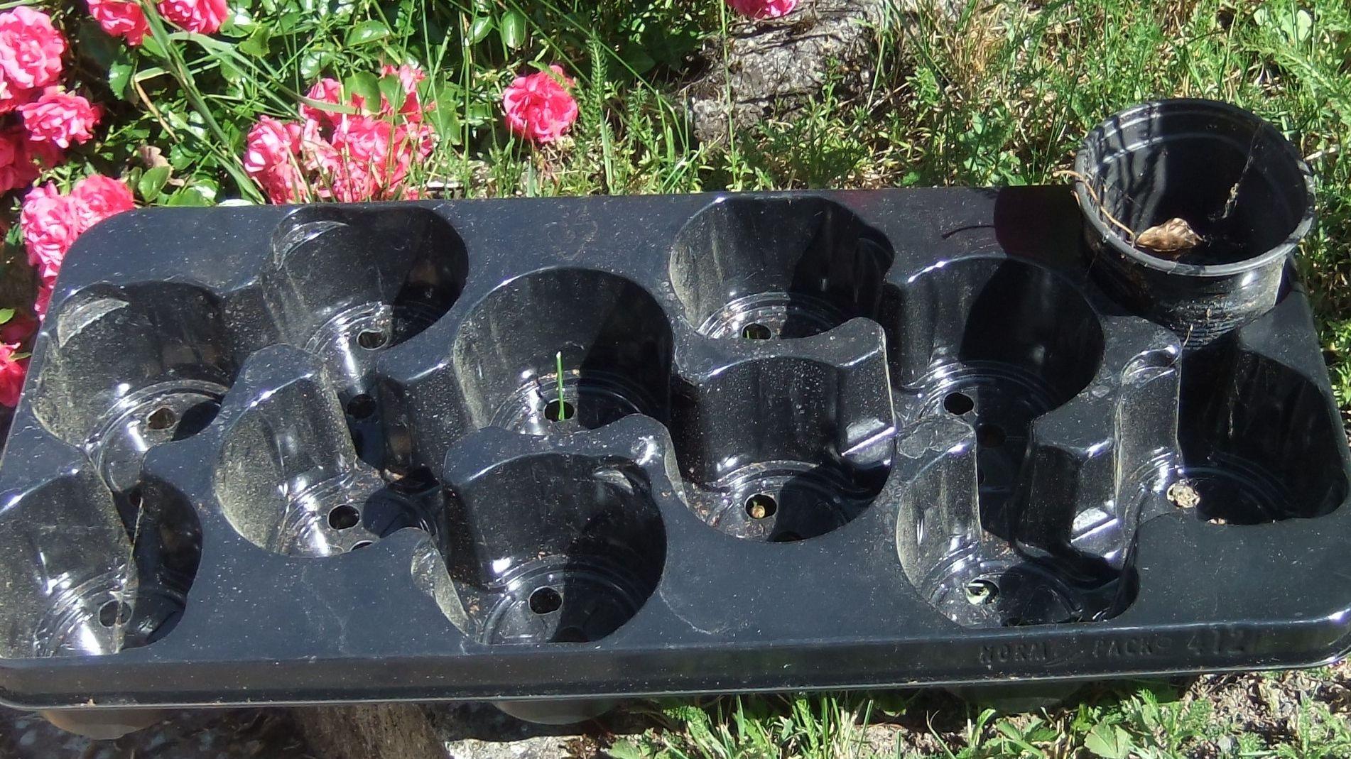 Blumentöpfe sind oft aus Plastik, ebenso wie die Palette, in der sie verkauft werden.
