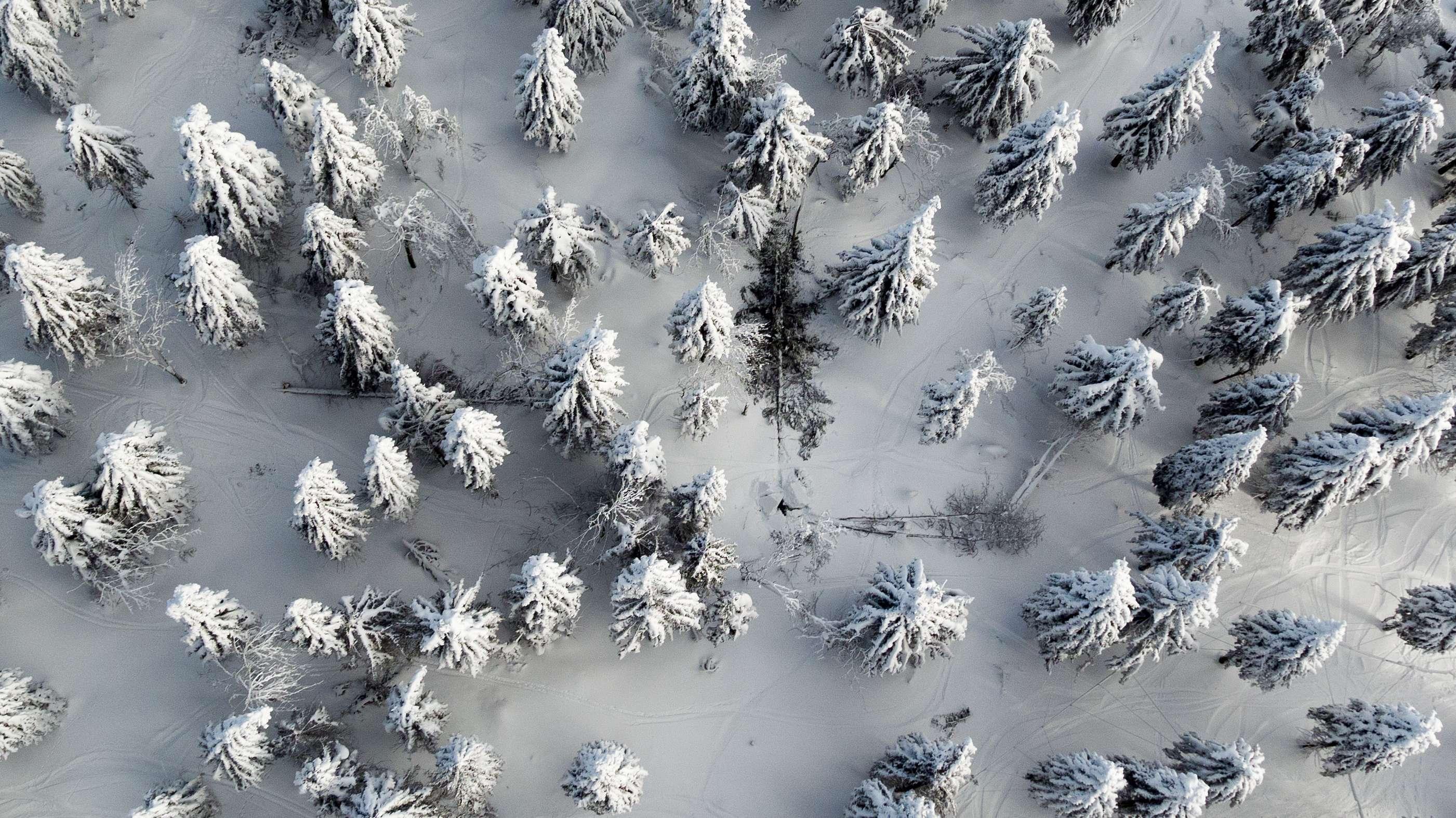 Schneebruch / Symbolbild