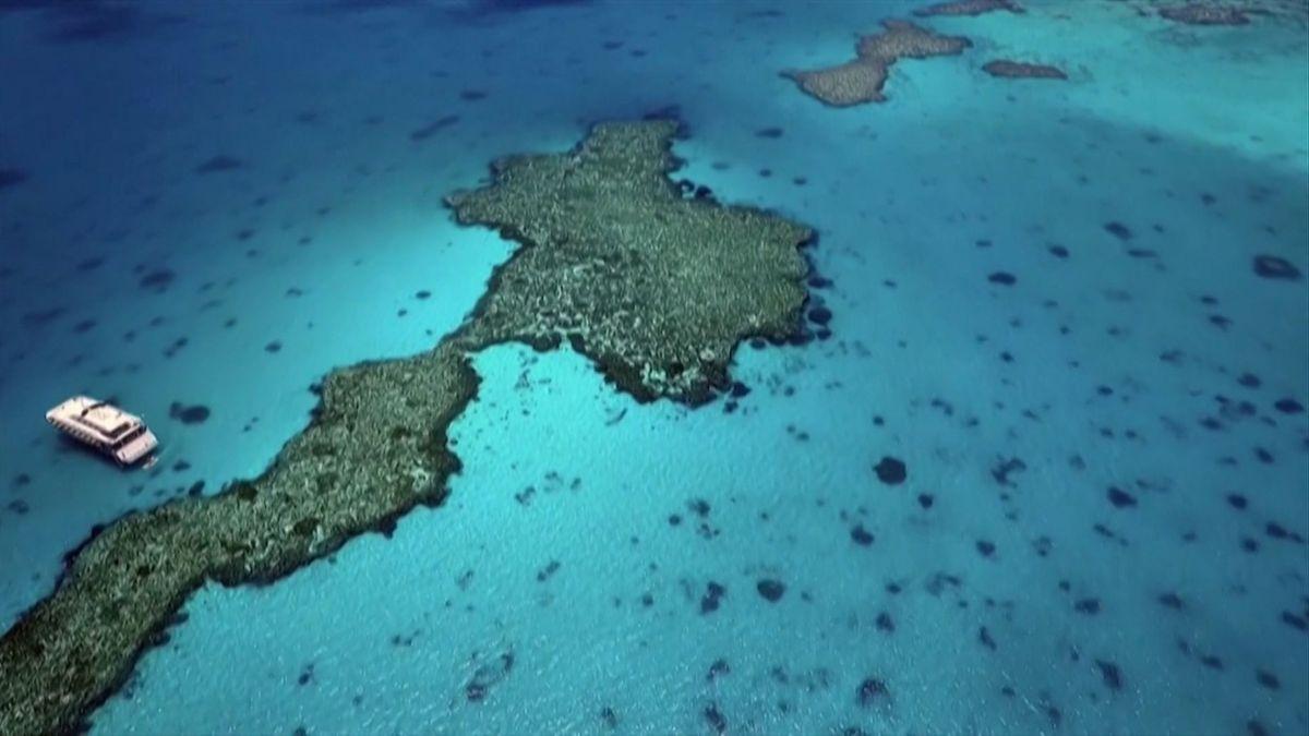 Das Great Barrier Reef.