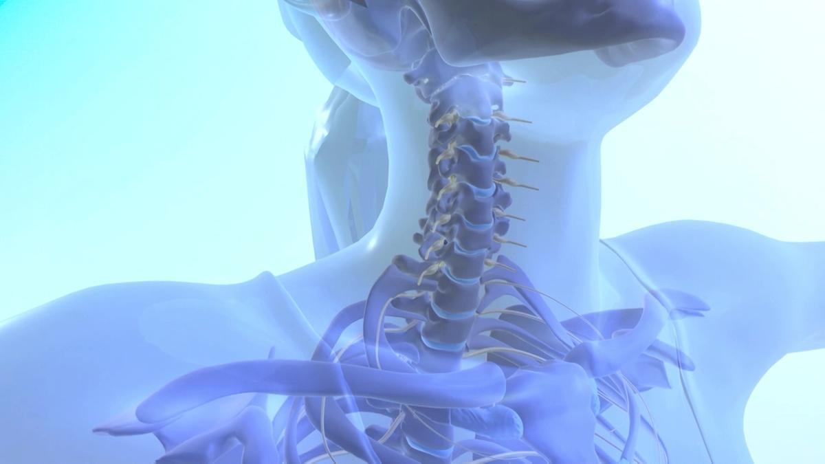 Wirbelsäule: Die Stütze unseres Körpers | Rückenschmerzen bekämpfen ...